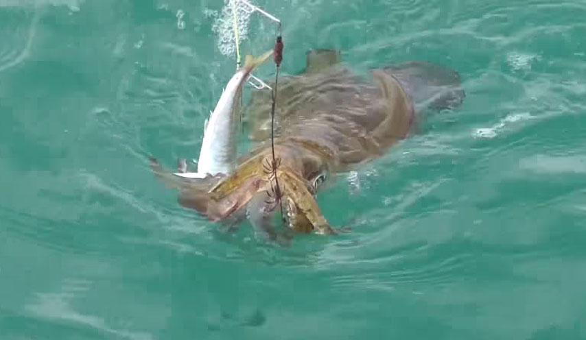 大雨の後のイカ釣り
